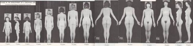 Nude Female Breast Development Time Lapse
