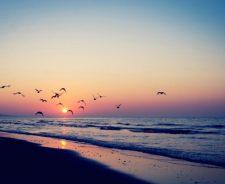 Tumblr summer beach sunset background